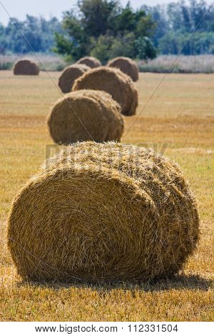 The Rolls Of Straw In The Summer
