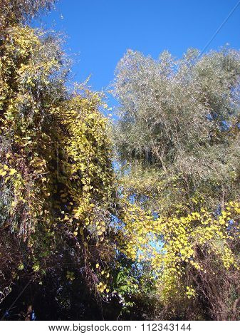 Vegetation Autumn