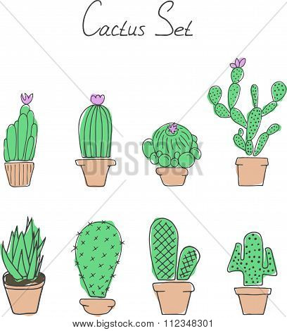 Set cactuses in the pots