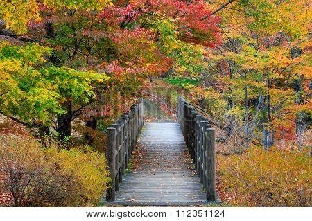 Asahiokakohan Ryokuchi Park, Yamanaka Lake, Japan