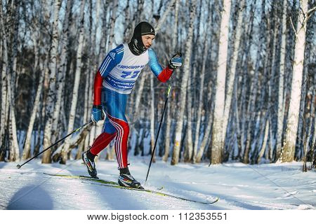 young male skier classic style in a winter birch forest on trails