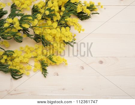 Mimosa on table