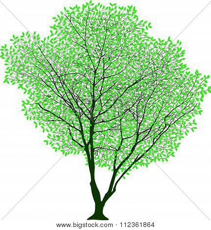 Lush Trees