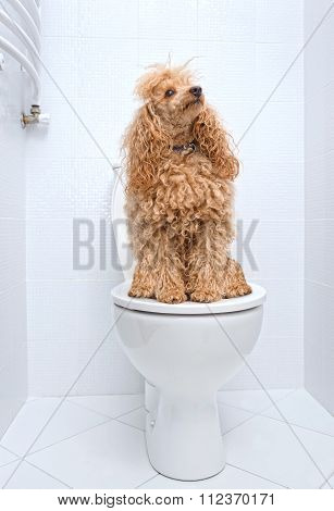 Dog sitting on toilet at home.