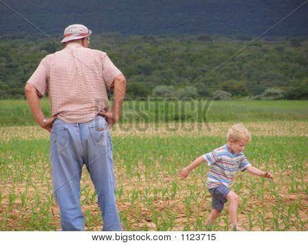 Boy And Grandpa In Maize Field