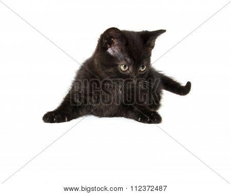 Cute Black Cat On White
