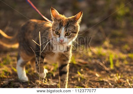 adorable beautiful ginger expressive cat outdoors