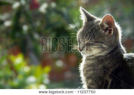 Gato cinza lado vista retrato