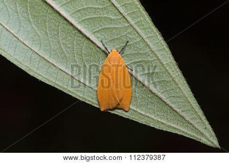 Orange Moth On Green Leaf