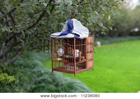 Songbird In Cage
