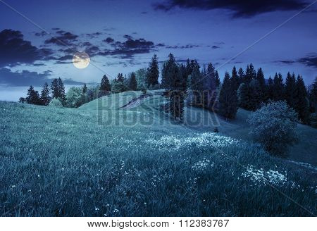 Few Trees On Hillside Meadow At Night