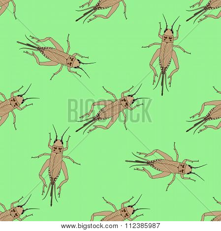 Seamless Pattern With Cricket Or Grig. Gryllus Campestris.    Hand-drawn Cricket. Grig. . Vector