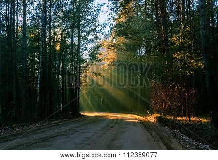 Sunbeams Pour Through Trees In Autumn Forest. Belorussian Nature