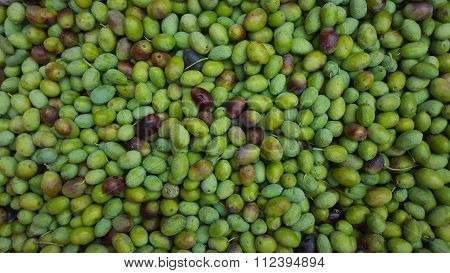 Freshly picked green olives overhead