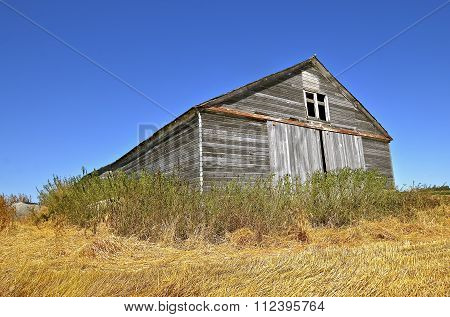 Shed in middle of a harvested wheat field