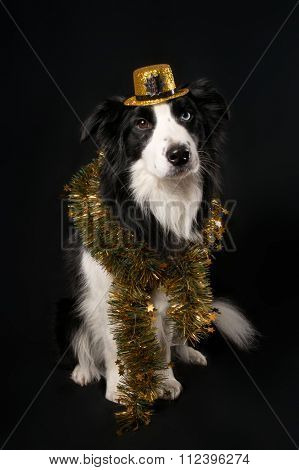 A dog in hat and tinsel on dark background