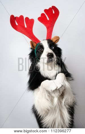 A dog in upright pose representing Santa's deer on light background