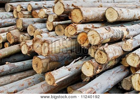 Pile Of Wood In Logs Storage