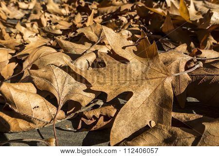 Fall Leaves On Rustic Wooden Background. Background Image