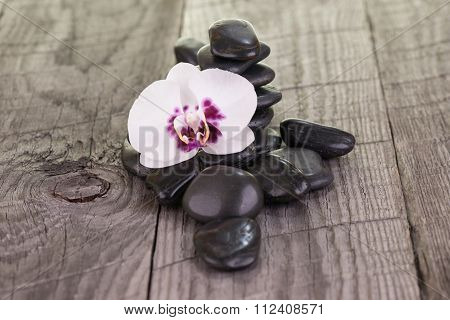 White Phalaenopsis Orchid And Black Stones On Weathered Wood