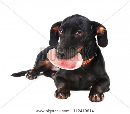 Dog holding raw meat in its mouth,  isolated on white