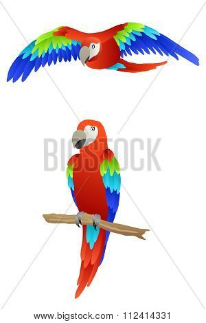 Bird parrot macaw red green blue isolated illustration vector
