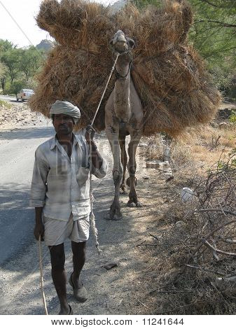 Old Man Leads His Camel Carrying Forage