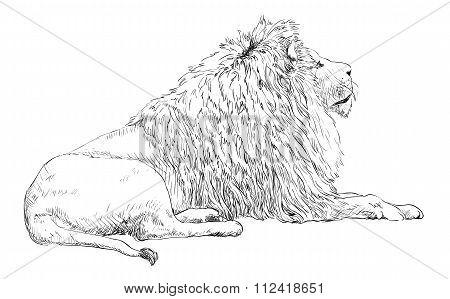 Engraved lion illustration