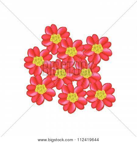 Red Yarrow Flowers Or Achillea Millefolium Flowers