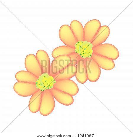 Orange Yarrow Or Achillea Millefolium Flowers