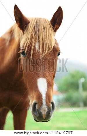 Horse grazing on meadow