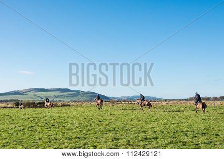 Horses  in Perthshire Farmland