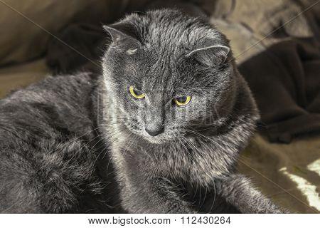 Centered Grey Cat