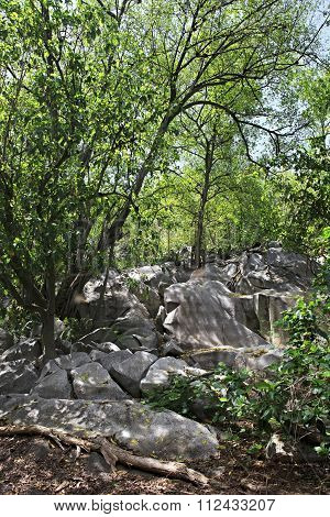 Beautiful boulders and trees on Cousin Island. Seychelles.