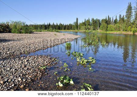 Landscape Of The Taiga River.