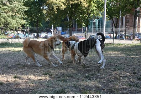 Three Dogs Game