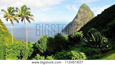 Vegetation Near Piton
