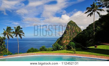 Piton Between Palm Trees