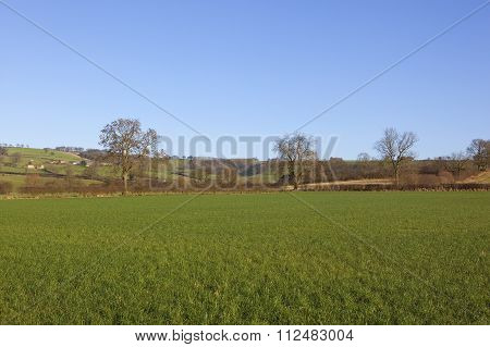 Green Meadow In Winter
