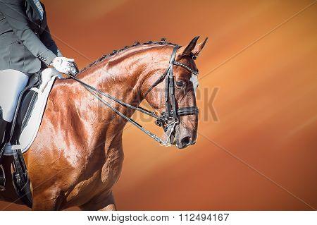 Bay horse: dressage - equestrian sport