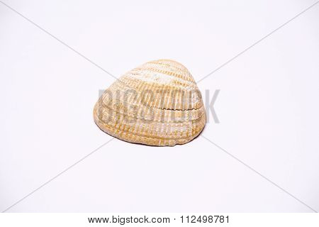 Isolated Seashell.