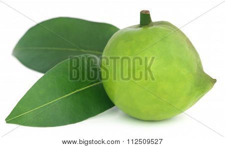 Garcinia Tinctoria Or Edible Daophal