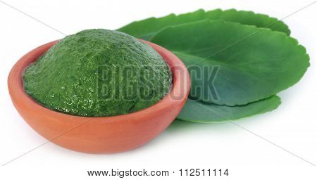 Mashed Medicinal Kalanchoe Leaves
