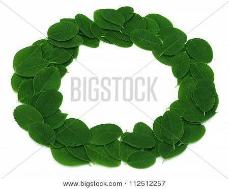 Edible Moringa Leaves Make A Frame