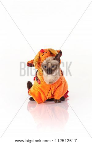 Siamese cat with a deer costume on a white background