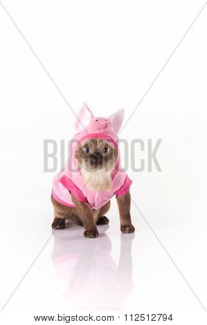 Siamese cat with a pig costume on a white background