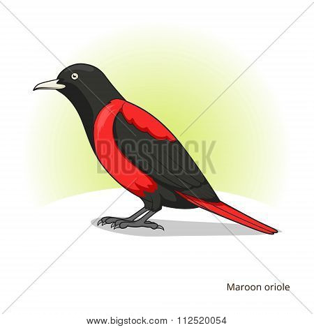 Maroon oriole bird educational game vector