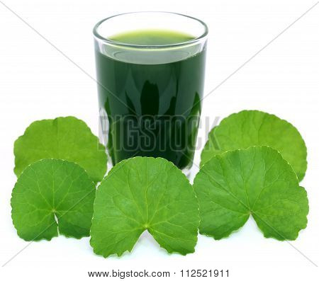 Medicinal Thankuni Leaves With Extract