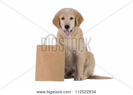 Golden Retriever Puppy Sitting With Bag Isolated On White Background