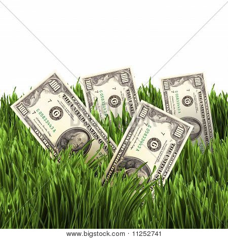 vegetation of dollar bills